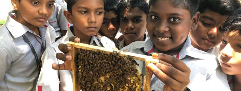 perks-students-learning-handling-honey-comb